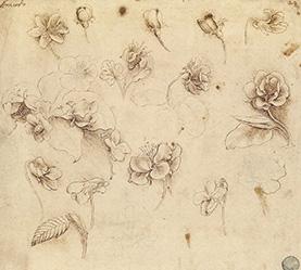 レオナルド・ダ・ヴィンチの画像 p1_26